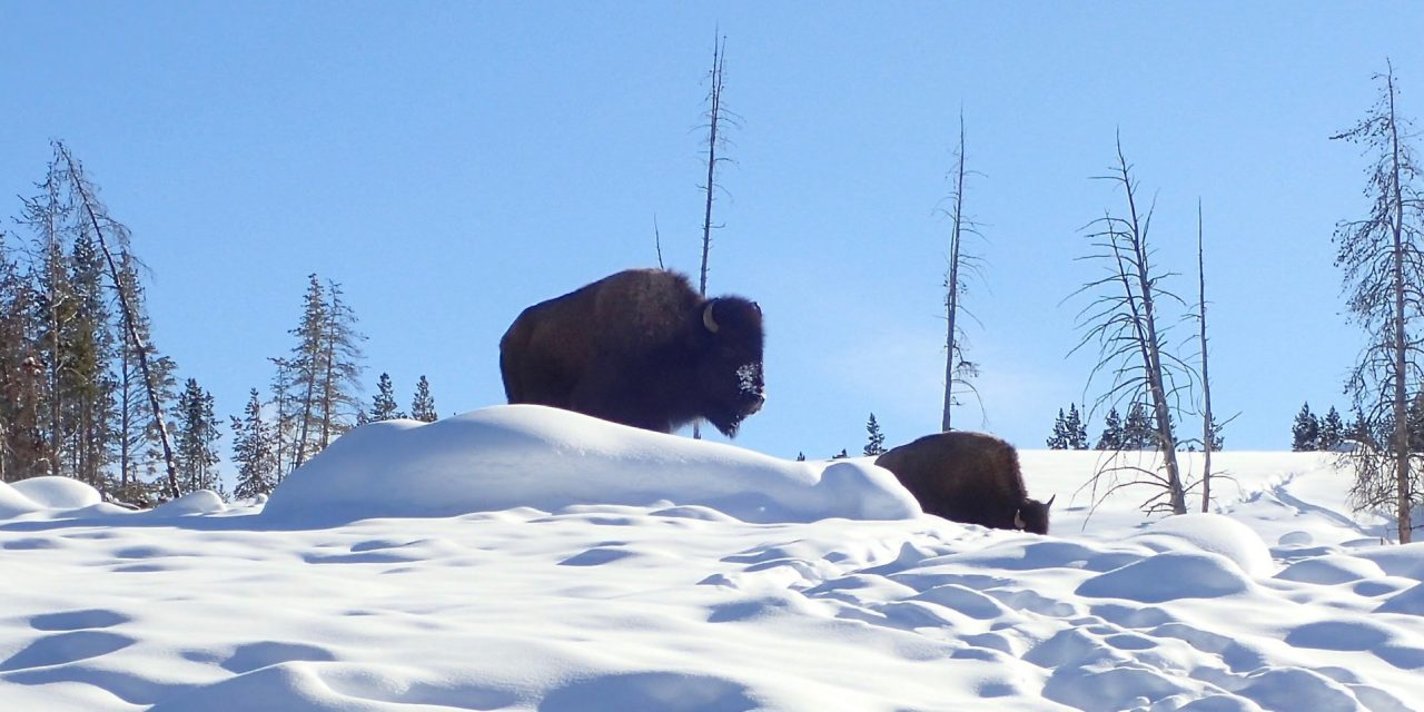 Day 2 – South Rim snowshoe